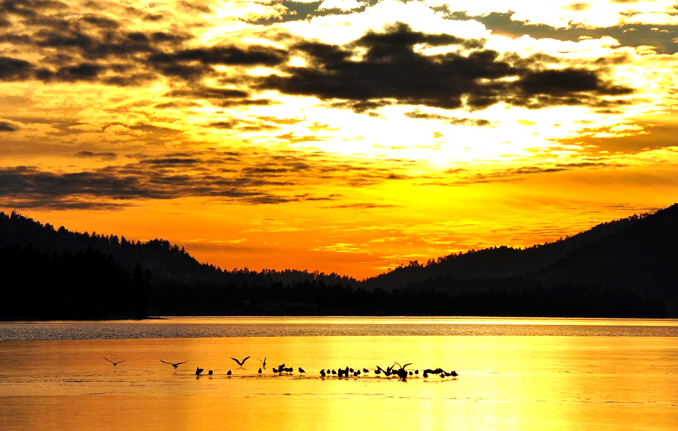 Birds on Big Bear Lake